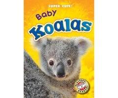 Baby Koalas - Megan Borgert-Spaniol
