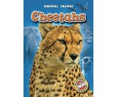 Cheetahs - Megan Borgert-Spaniol