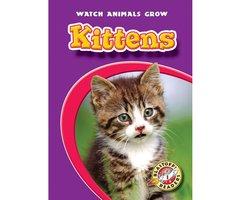 Kittens - Colleen Sexton