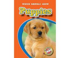 Puppies - Colleen Sexton