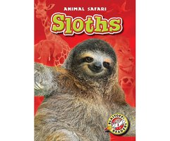 Sloths - Megan Borgert-Spaniol