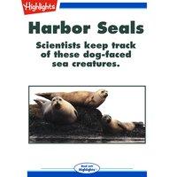 Harbor Seals - Bob Michelson