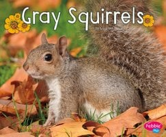 Gray Squirrels - G.G. Lake
