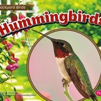 Hummingbirds - Lisa Amstutz