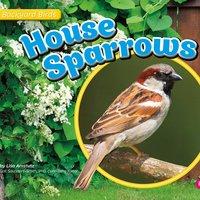 House Sparrows - Lisa Amstutz