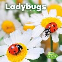 Ladybugs - Lisa Amstutz