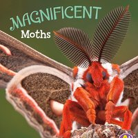 Magnificent Moths - Martha Rustad