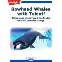 Bowhead Whales with Talent! - Laura Lane
