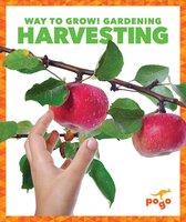 Harvesting - Rebecca Pettiford