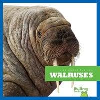 Walruses - Cari Meister