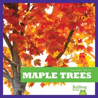 Maple Trees - Rebecca Stromstad Glaser