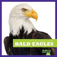 Bald Eagles - Mari Schuh