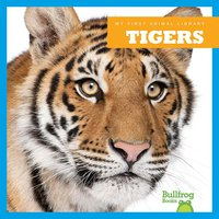 Tigers - Cari Meister