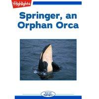Springer, an Orphan Orca - Sharlene P. Nelson