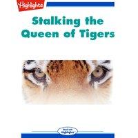 Stalking The Queen of Tigers - Pamela S. Turner