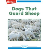 Dogs That Guard Sheep - Cat Urbigkit