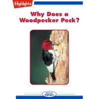 Why Does a Woodpecker Peck? - Jodi Forschmiedt