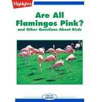 Are All Flamingos Pink?