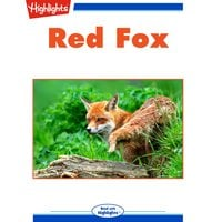 Red Fox - Pat Lessie