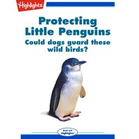 Protecting Little Penguins - Amanda Hill
