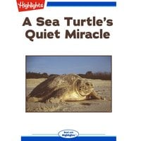 A Sea Turtle's Quiet Miracle - Lorraine A. Jay
