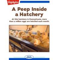 A Peep Inside a Hatchery - Lisa Amstutz