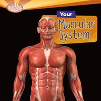 Your Muscular System - Rebecca L. Johnson