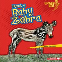 Meet a Baby Zebra - Lisa Owings