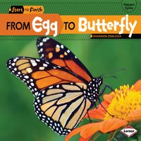 From Egg to Butterfly - Shannon Zemlicka