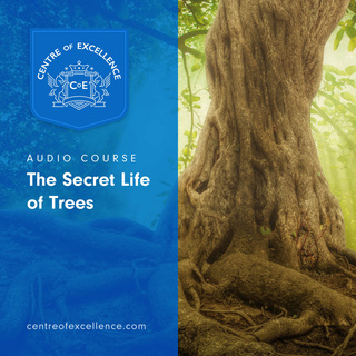 The Secret Life of Trees - Centre of Excellence