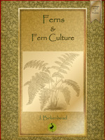 Ferns and Fern Culture - John Birkenhead