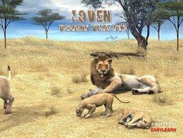 Løven - Steven Kinch