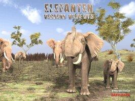 Elefanten - Steven Kinch