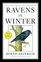 Ravens in Winter - Bernd Heinrich