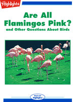 Are All Flamingos Pink? and Other Questions About Birds - Highlights for Children