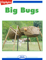 Big Bugs - Jennifer Mattox