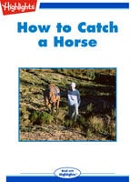 How to Catch a Horse - Will Doig