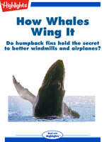 How Whales Wing It - Anna Ouchchy