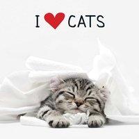 I Love Cats - Adams Media