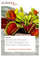 Mordende Pflanzen: Brutale Strategien im Reich des Chlorophylls - Kerstin Schmidt-Denter
