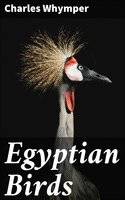 Egyptian Birds - Charles Whymper