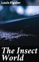 The Insect World - Louis Figuier
