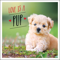 Love is a Pup: A Dog-Tastic Celebration of the World's Cutest Puppies - Charlie Ellis